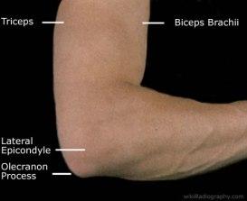 Surface anatomy posterior